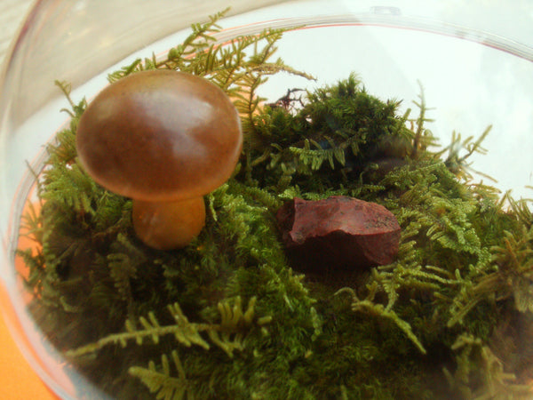 terrarium decor mushrooms