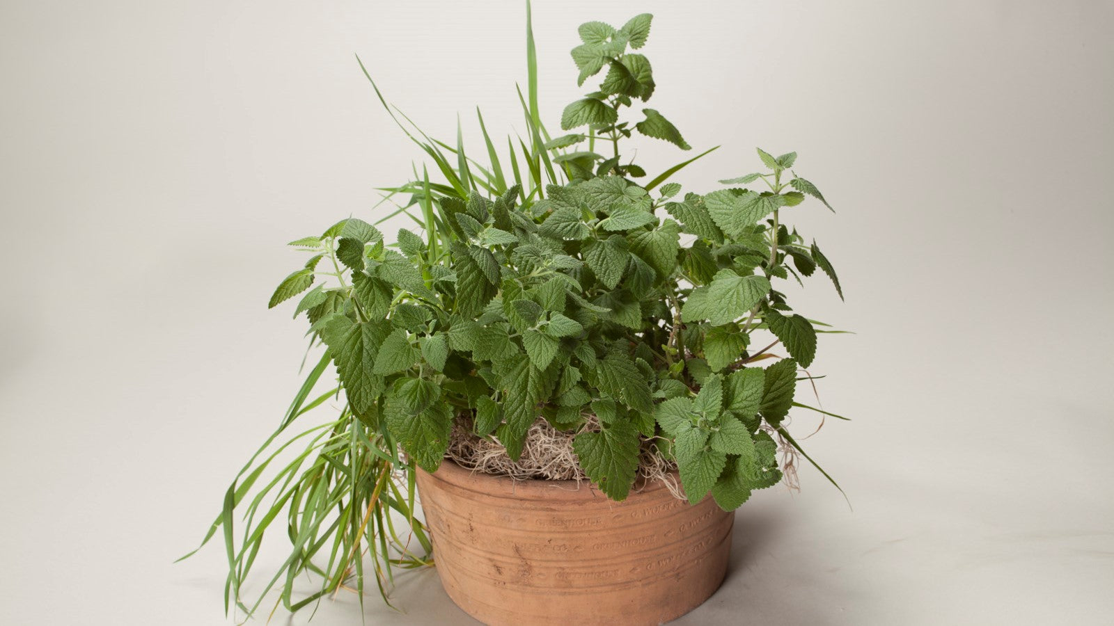 Hints for Healthy Indoor Herbs!