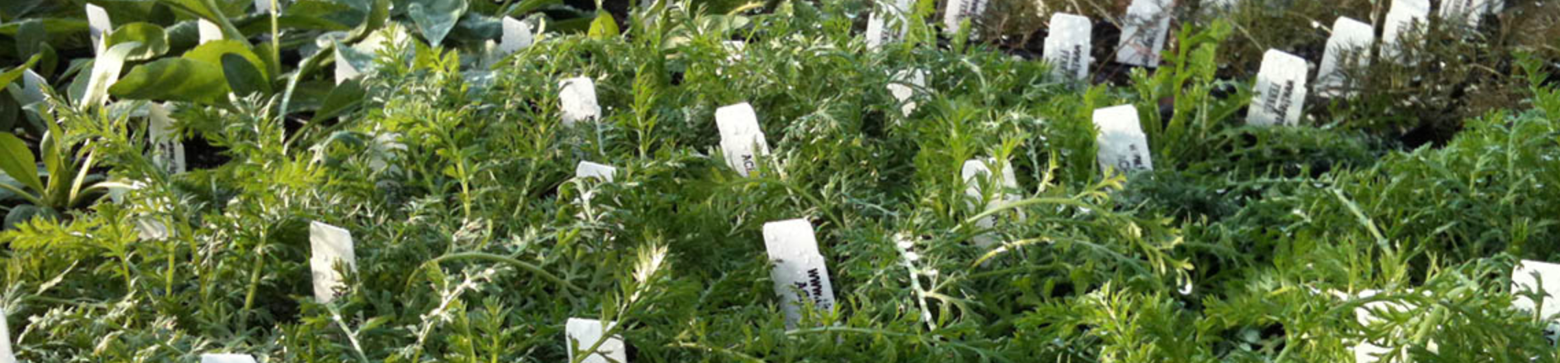Bulk Discount on Herb Plants