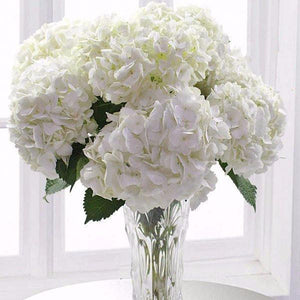 Gorgeous White Hydrangea brighten up our lives with their beauty and fragrance! This item features 10 White Hydrangea hand tied by our professional designers. Toronto Online Flower Delivery Service for Luxury Roses providing free delivery in the greater Toronto area for Birthdays, Anniversary, New baby, Weddings, Mother's Day and Valentines day