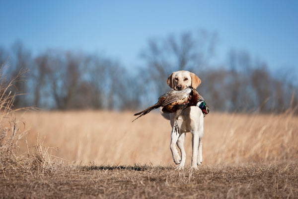 We're Gearing Up for the Orvis Game Fair & Sporting Weekend!