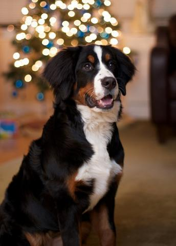 DoggieLawn Explores: Decking The Halls For The Holidays