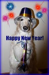 DoggieLawn Explores: Ring In The New Year With Fido!