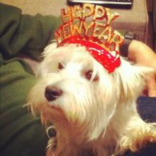 DoggieLawn Explores: New Years Resolutions With Your Dog!
