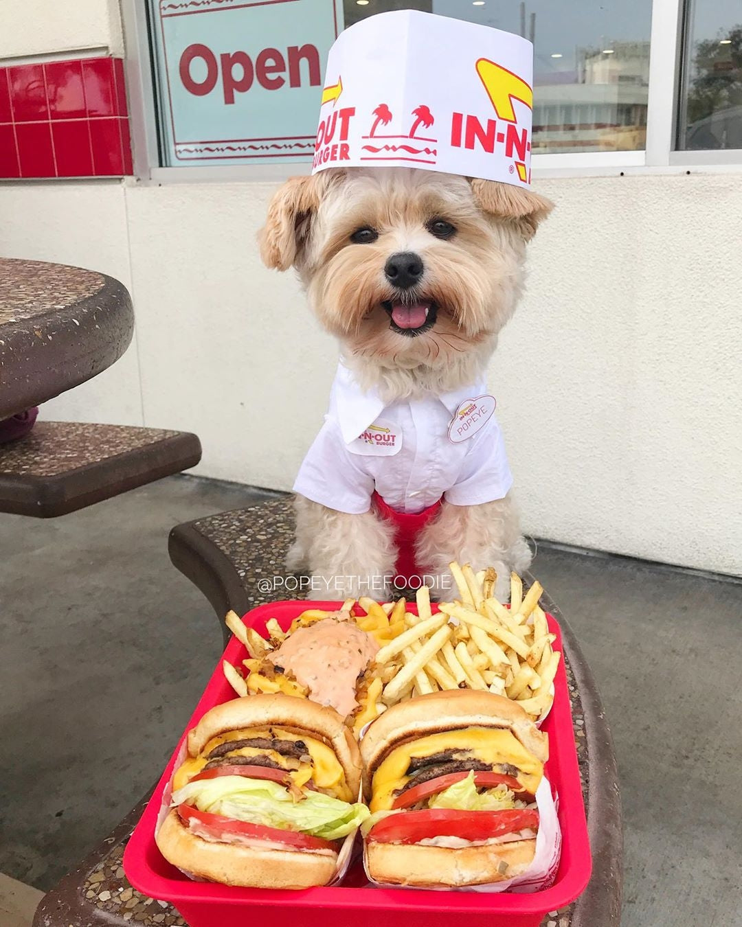 in-n-out dog