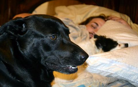 DoggieLawn Explores: Helping Your Energetic Dog Fall Asleep!