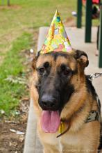 DoggieLawn Explores: Ringing In 2016 With A Bang? Keep Your Dog Safe and Secure!