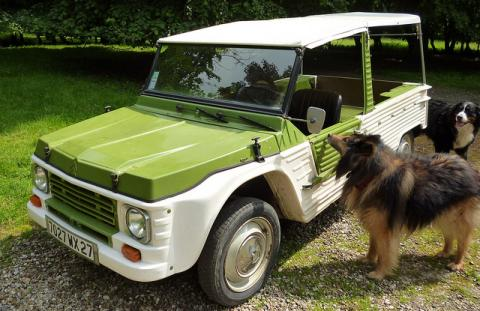 Two dogs looking at a green and white car.