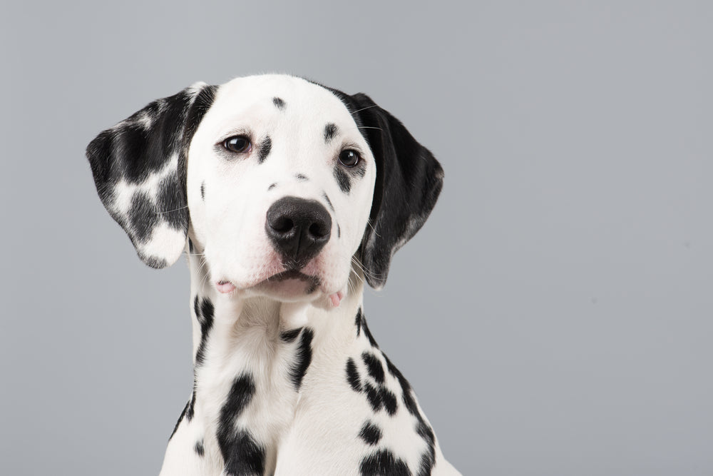 5 Tough to Train Dogs Even Though They're Cute