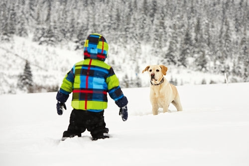 Little boy in snow with his labrador