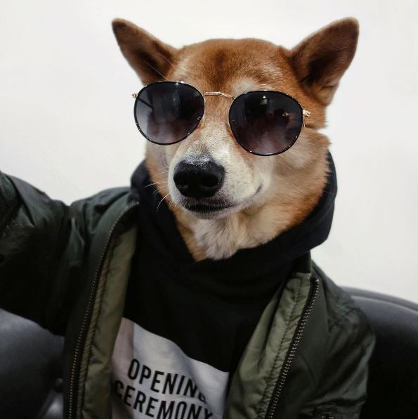 The Dogs of Instagram That Have Won Us Over