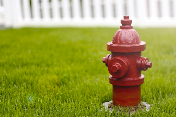 Dog fire hydrant on grass