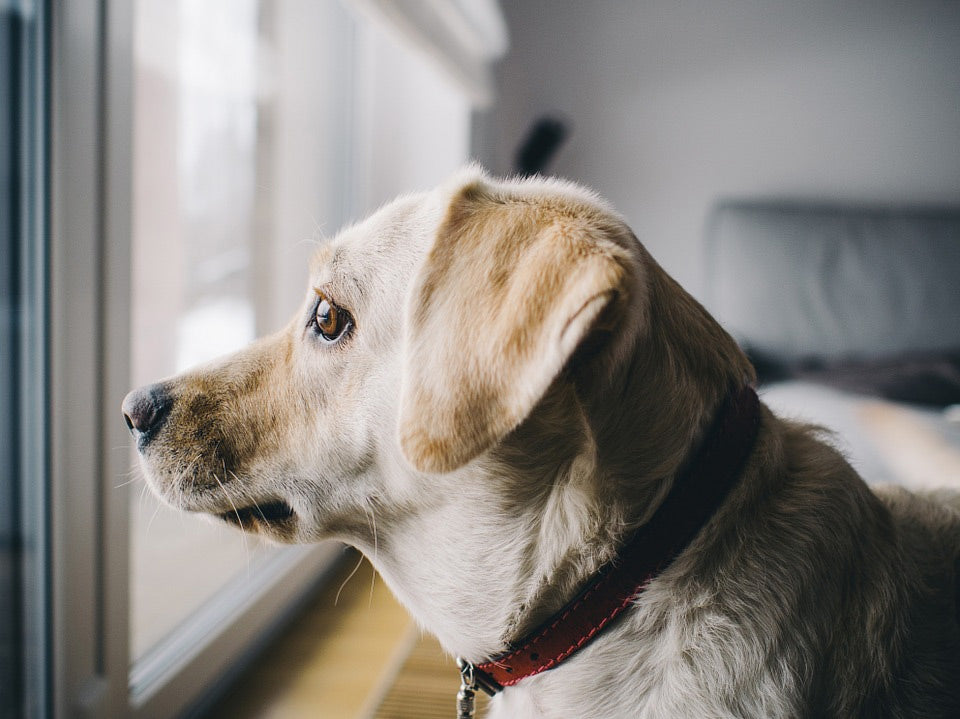photo of a dog