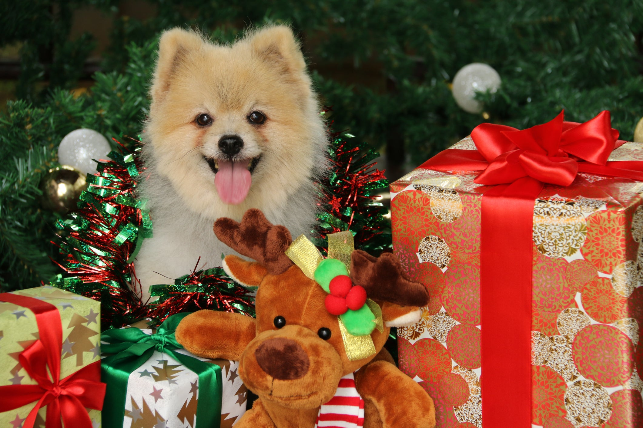 Read DoggieLawn's list of holiday gifts for your dog, and be sure to grab some dog potty grass for your pup.