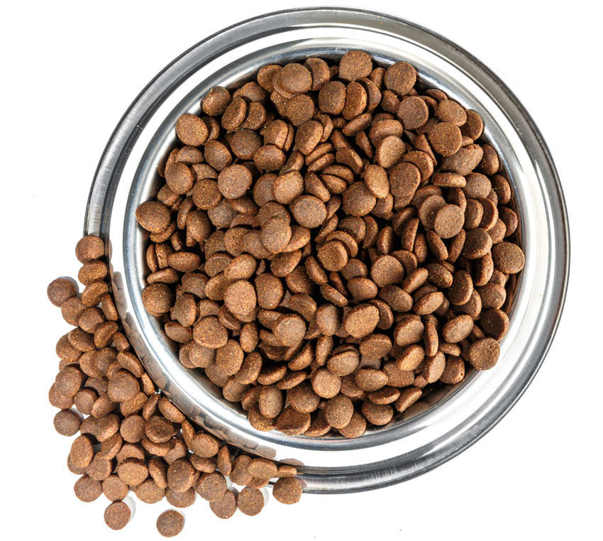 bowl of dog kibble