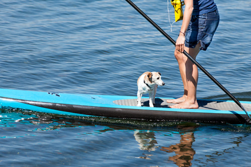 Dog on a standup paddle board