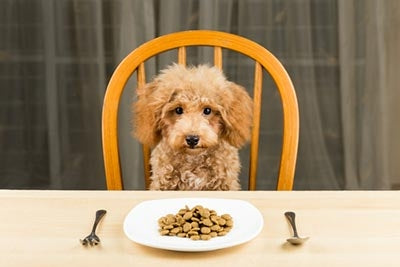 small breed dog food