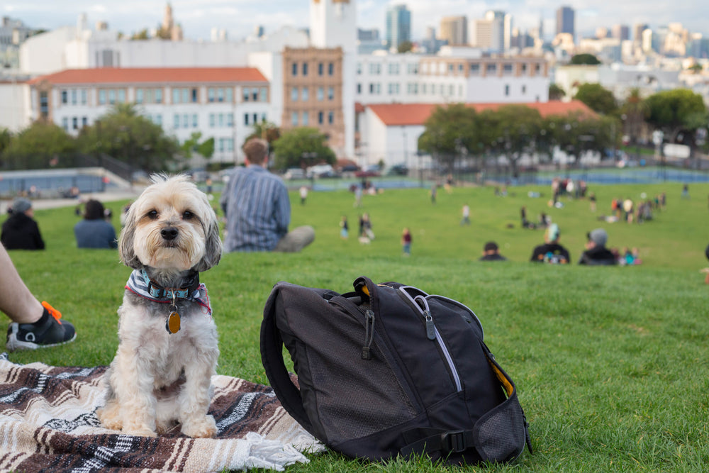 Dog in delores park