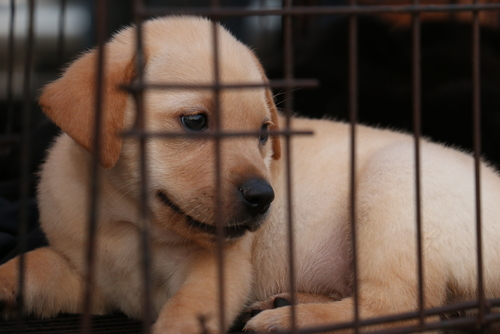 Puppy in a crate