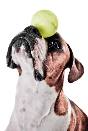 Avoid these common training mistakes when training your beloved animal.