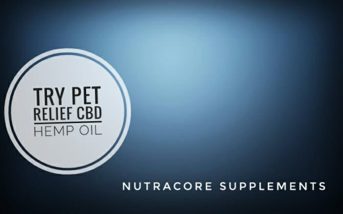 Want To See Your Pet Hopping Happily Again – Try Pet Relief CBD Hemp Oil