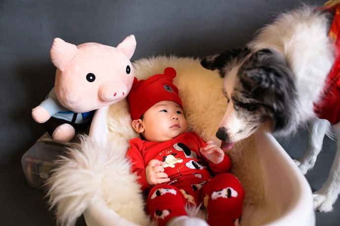 Expecting? Integrating Pets and Babies in Your Home