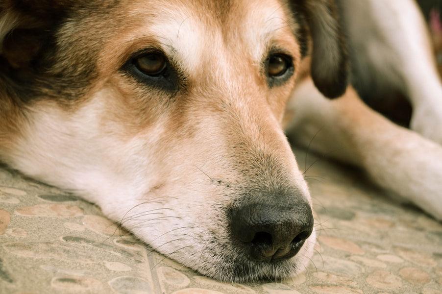 Mold: The Silent Home Toxin Sickening Your Dog