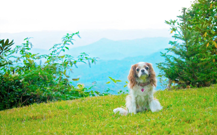 Flea and Tick Prevention Revisited