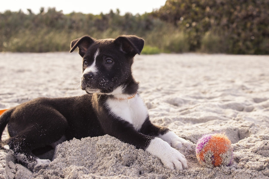 5 Toys That Will Keep Your Dog Healthy and Active