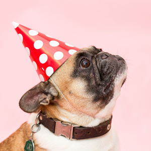 Party Pooper Birthday Hat - 10 pack