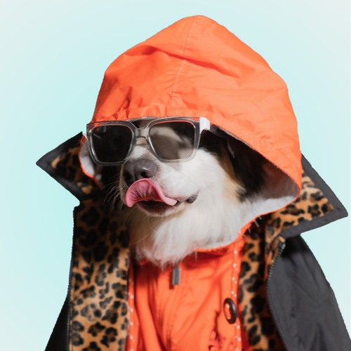 Barkie Bark Hooded Jacket