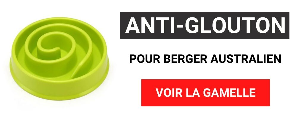 gamelle anti glouton berger australien