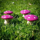 Pink fairy mushrooms
