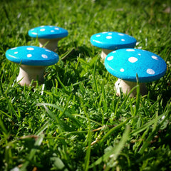Blue fairy toadstools