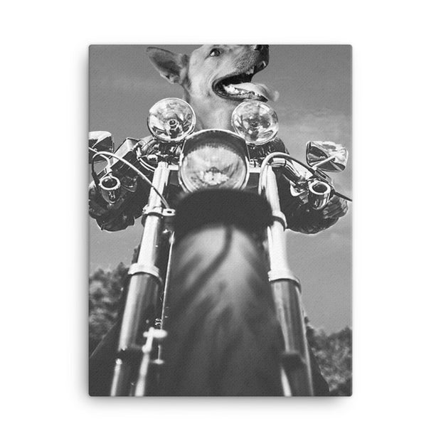 Easy Rider Canvas Print - The Vintage Paws