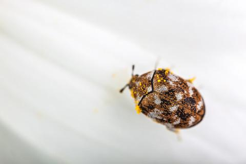 3% off Carpet Beetle Treatment Bundle Deal