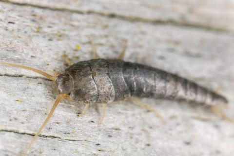 3% off Silverfish Treatment Bundle Deal