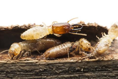 3% off Termite Treatment Bundle Deal