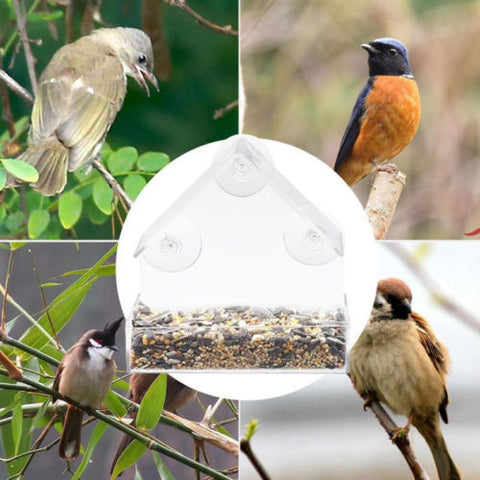 Acrylic Transparent Bird Squirrel Feeder Tray Birdhouse Window Suction Cup Tools Parrot Lovebird Canary Food Pigeon Pet Supplies
