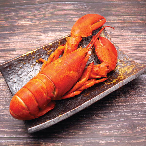 Whole Cooked Canadian Lobster 500-600g/pc กุ้งล็อบสเตอร์แคนาดาต้มสุก - The Foodworks