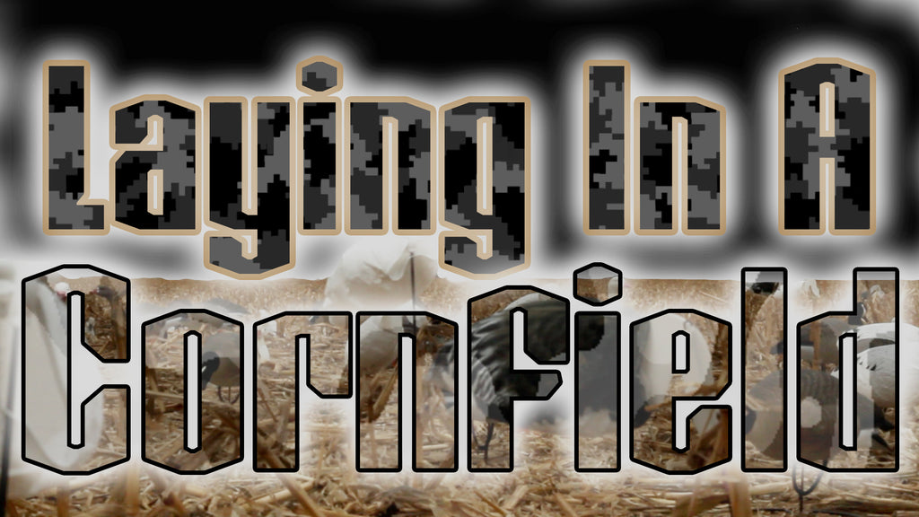 Go Watch The Laying In A Cornfield Video