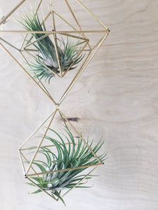 Brass Himmeli Air Plant Holder | DIY Craft Kit for Beginners, Tutorials, Scandinavian Decor, Geometric Mobile, Gifts for Crafters