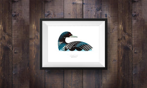 Common Loon – Signed Print (2 sizes)