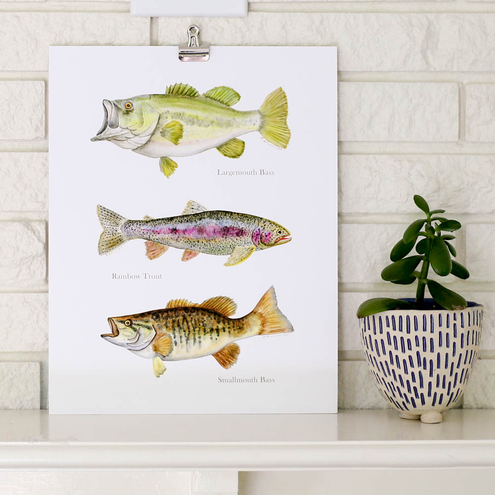 Bass & Trout Fish Print