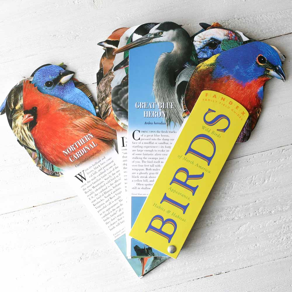 Birds Field Guide Fandex