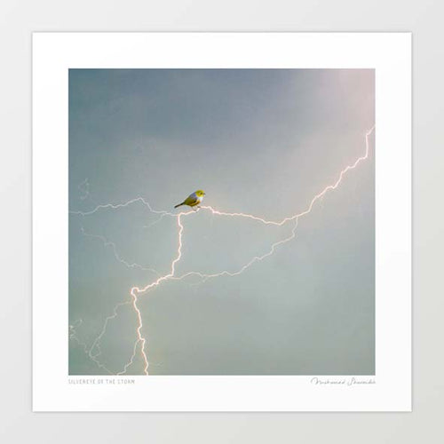 Silvereye of the storm Art Print
