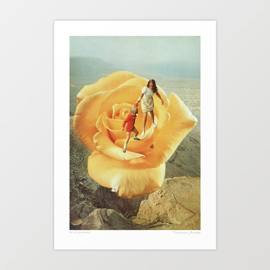The yellow big rose Art Print