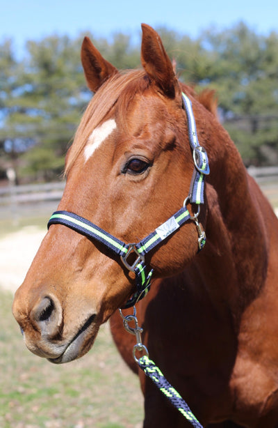 TuffRider Nylon Breakaway Halter & Lead Set_5159