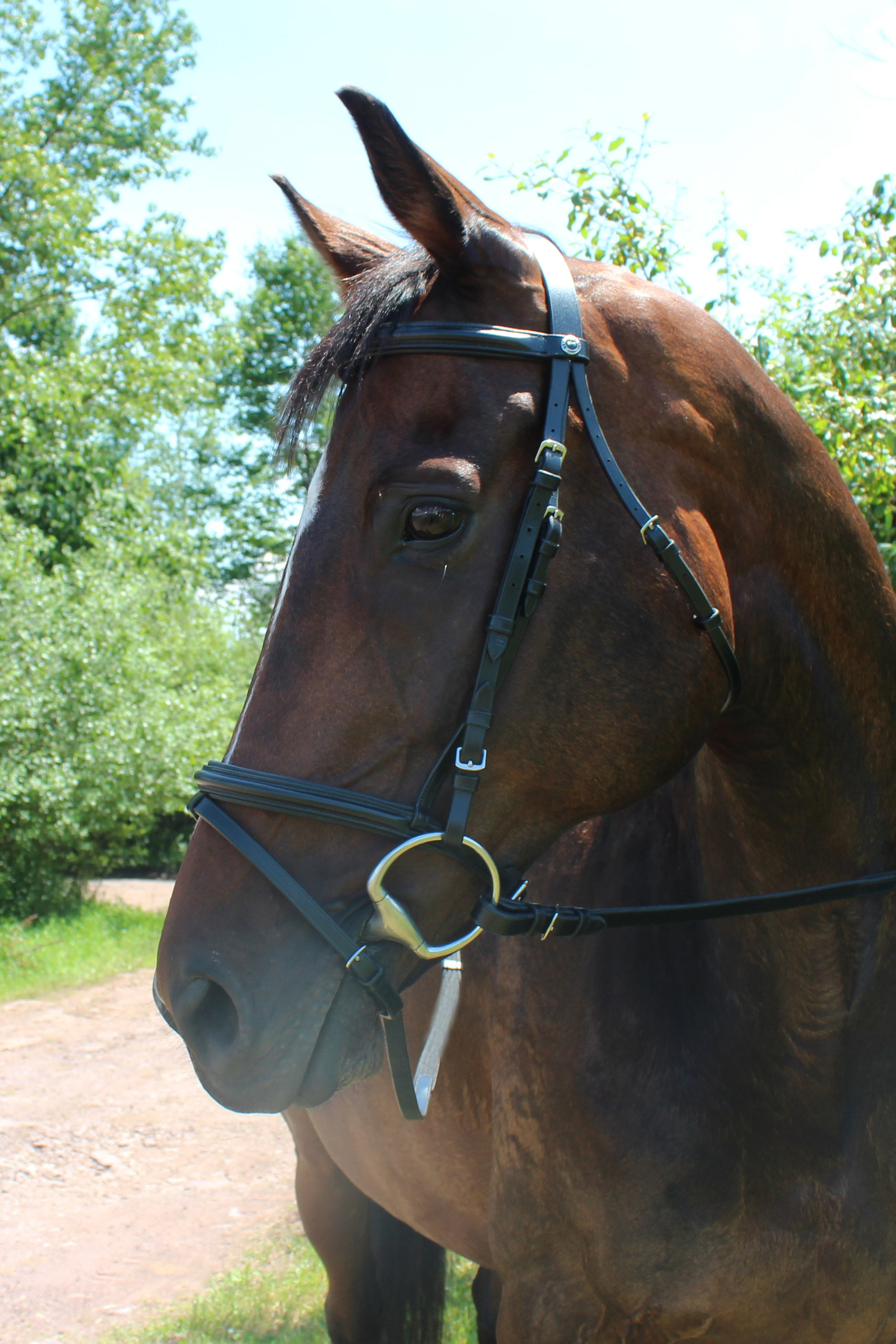 Henri de Rivel Pro Padded Dressage Bridle with Flash and Web Reins_1