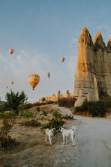Two dogs sniff each other with hot air balloons and hoodoos in the background.